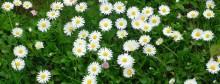 Flori albe si libertate de Elena Alexandru