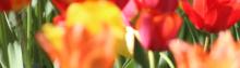 Rozsnai Zsolt - Regele florilor