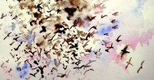 Culori de Ana Marina