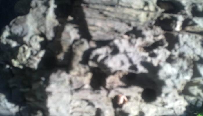 Fabulă cu Roşia Montană - Horia Crioşteanu