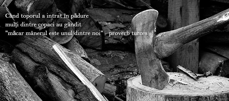 citate despre padure Citate care iti vor da fiori | CitesteAsta citate despre padure